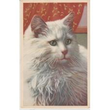 CARTOLINA FAUNA GATTI  CATS...
